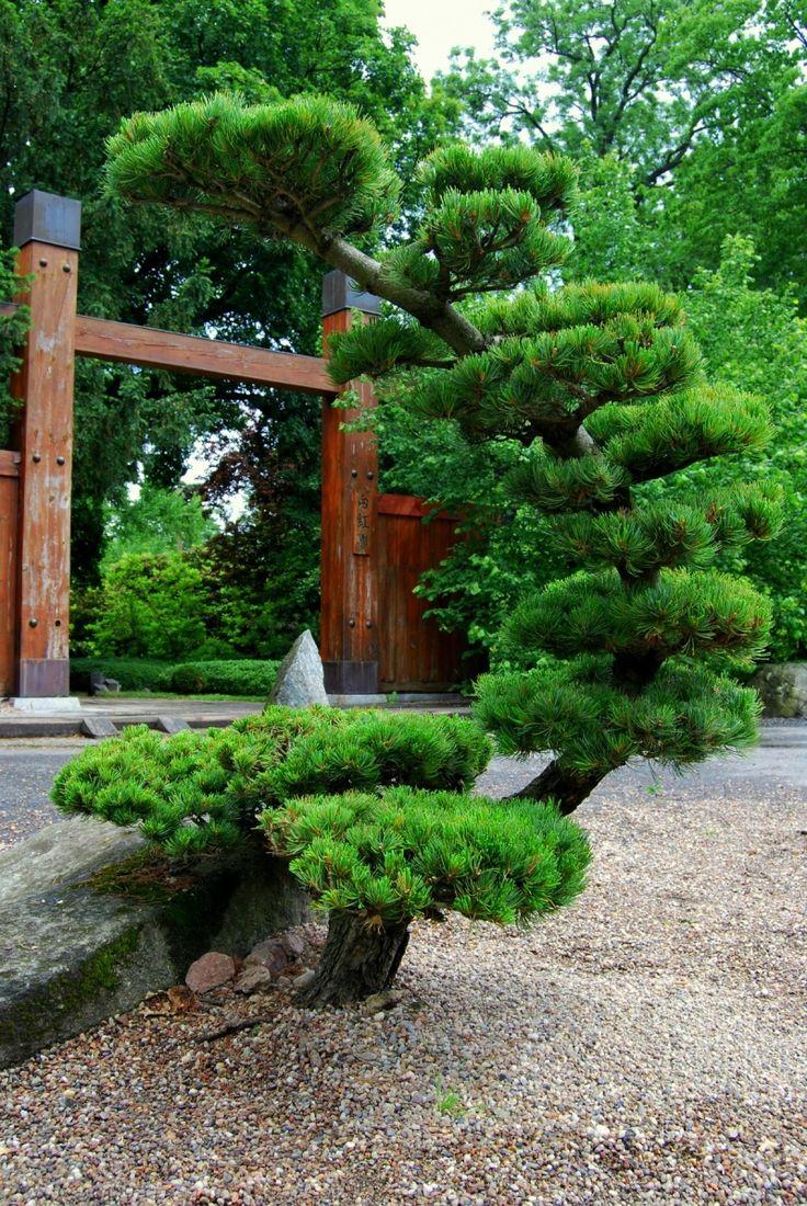Вроцлав. Японський сад. Japanese Garden. Ogród japoński.