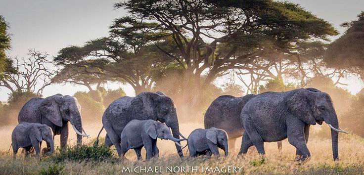 Family of Elephants, Michael North Imagery