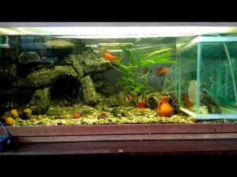 Мой аквариум (Aquarium) 100 литров - YouTube