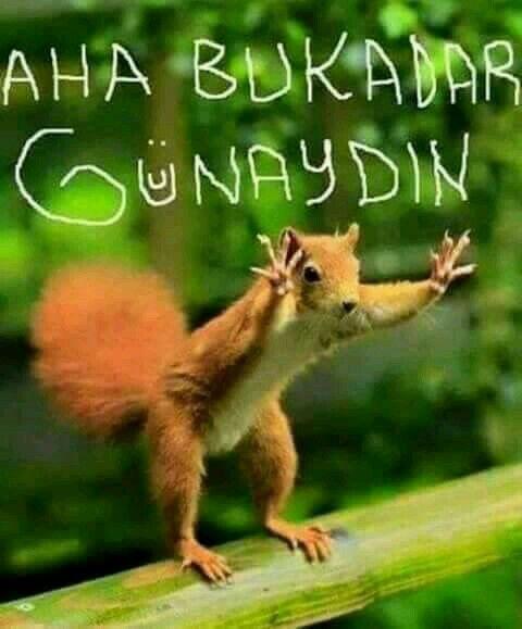 Aha bu kadar :) :) :) :) :) :)