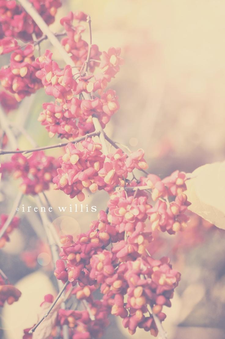 autumn flowers, colours amazing!