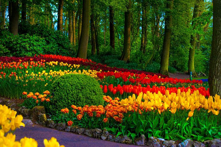 Colorful Corner Of The Keukenhof Garden 4. Tulips Display. Netherlands by Jenny Rainbow