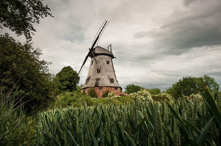 Wiatrak typu holenderskiego w Palczewie, Polska. A Dutch windmill in Palczewo, Vistula Delta, Poland. Photo by Grażyna Saniuk