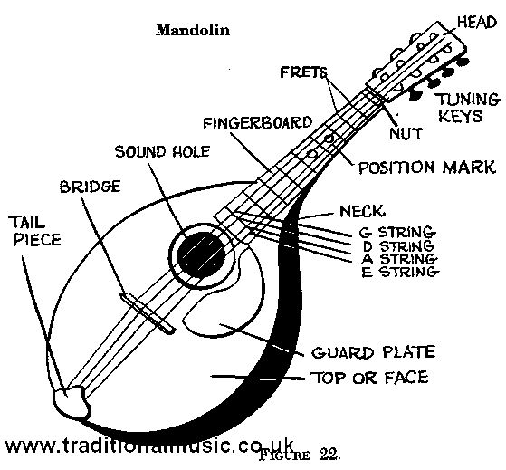 mandolin string order