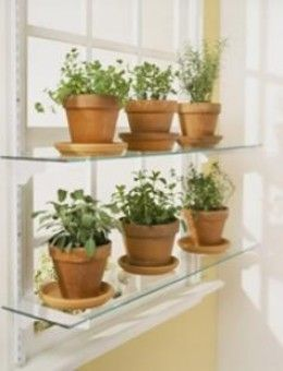 What Is The Next Step Herbs Garden Shelving And Herbs