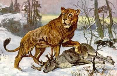 Extinct animals: Cave Lion: one of the largest lions ever (extinct 2,000 years ago)