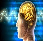 More and more parents are enrolling their children for these programs so as to increase their memory and learning power. Before going deep into the Midbrain activation, let us first understand what actually midbrain is. http://www.nasindependenceday.com/2016/08/midbrain-activation-methods-and-concepts.html