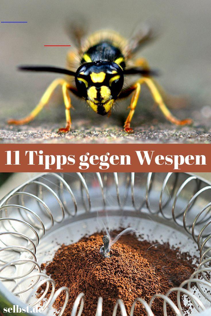 Householdhacks Wespen Sind Im Sommer Nervige Dauergaste Am Esstisch Wir Verraten Die 8 Besten Tipps Um Wespen Zu Vertre Wespen Vertreiben Wespe Vertreiben