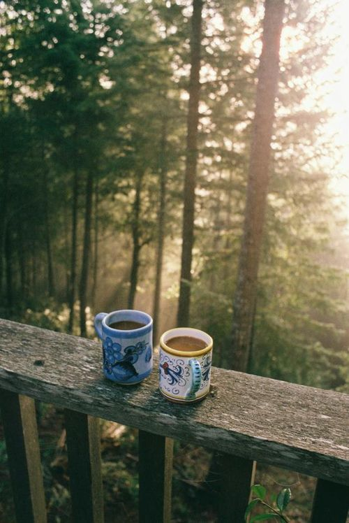 I want to drink morning tea and stare at the forest from a lodge balcony.