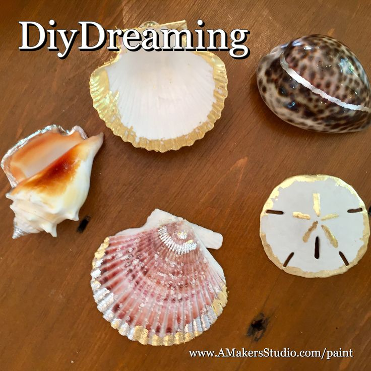 Diy gilded seashells sand dollar sea shells gilded