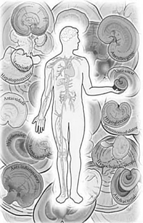FIGURE 9.2. Postulated health benefits of lingzhi (Ganoderma lucidum).