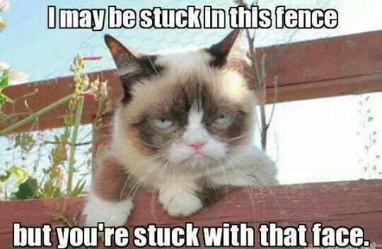 Grumpy Cat explains why her situation is not as bad as yours