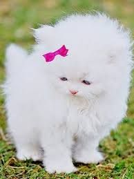 Image result for kittens and puppies images