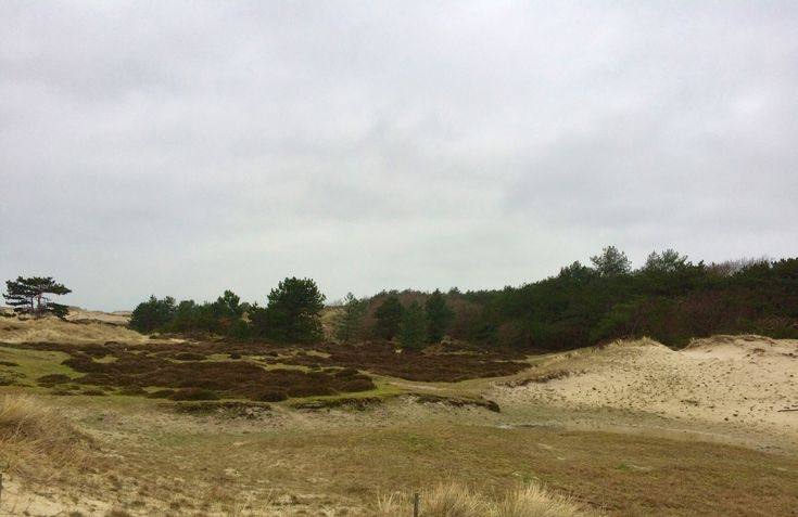Landerummerheide vlakbij vakantiehuis Windstil op Terschelling