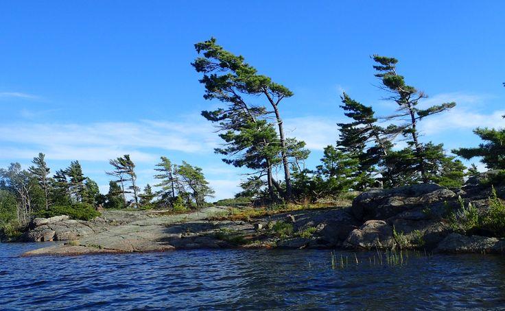 Trees, Cunningham Islands, July 2017