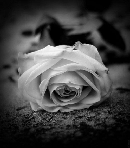 66 best belles photos  u0026quot noir et blanc u0026quot  images on pinterest