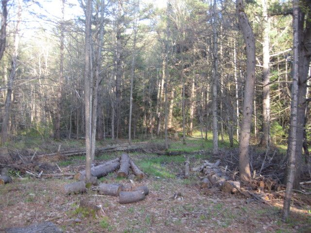 BEAUTIFUL TREED BUILDING LOT Beautiful treed building lot just minutes to Parry Sound on Highway 518.  The site has been cleared and a driveway will be installed with culvert over the gentle running stream.  Walk in to the middle and you will love this natural setting.  File # 1160