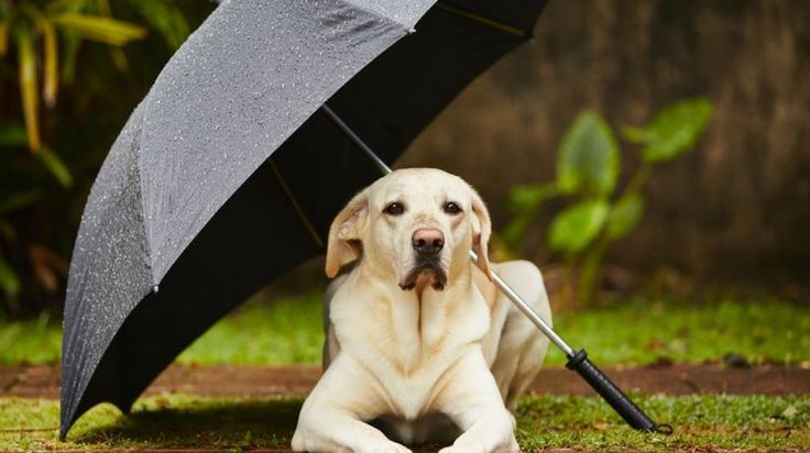 Looking for some smart fire and electrical tips to keep your pets safe? Are you sure your home and pet are protected by safety precautions? Doubts? Read on!