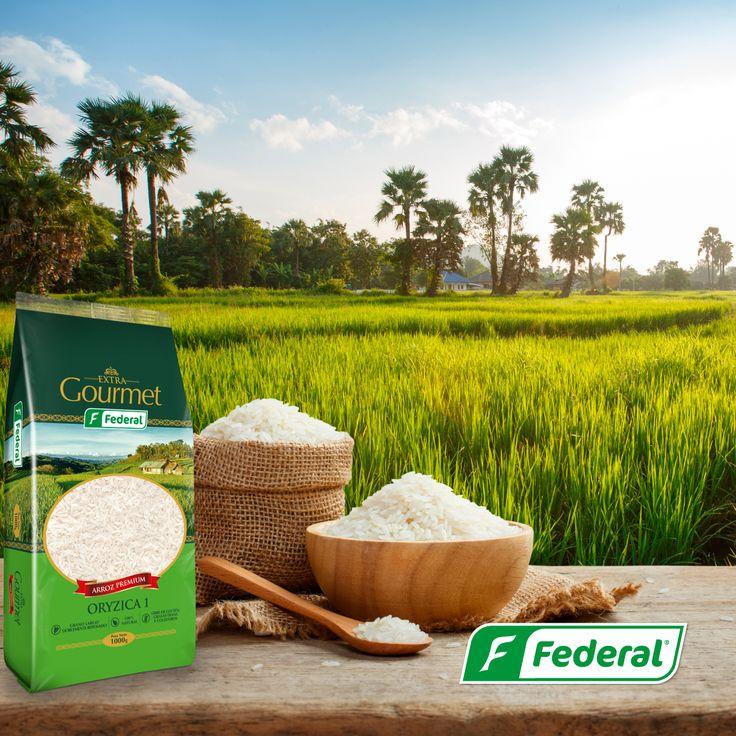 ¡Origen!  Sabemos que cuidar cada detalle nos convierte en expertos en la producción de arroz, por eso nuestros cultivos están ubicados en el mejor terreno posible, la Meseta de Ibagué, donde las condiciones del suelo y las propiedades climáticas hacen de este el lugar perfecto para que nuestro arroz tenga la mejor calidad.  #maestrosarroceros