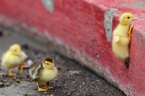 prison break: Baby Chick, The Roads, Baby Ducks, Motivation Quotes, Months Baby Photos, So True, Rocks Climbing, Inspiration Quotes, Nevergiveup