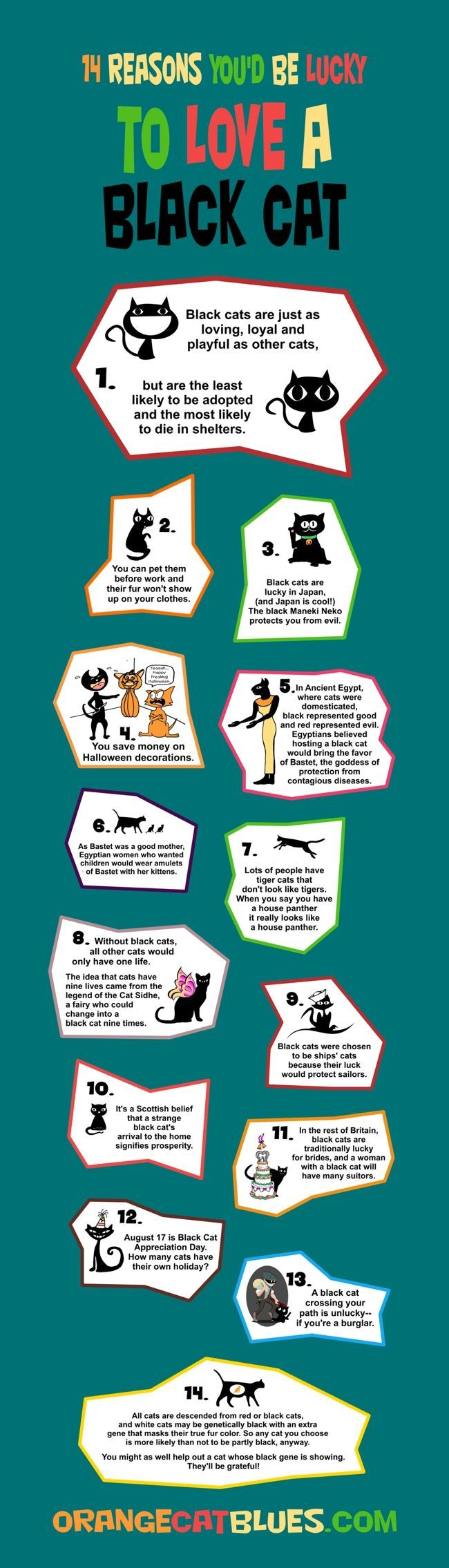 Cats | Tipsographic | More cats tips at http://www.tipsographic.com/:
