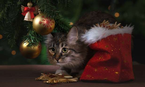 'Tis the season to be merry — but these cute kitties didn't get the memo.Originally published Decemb... - Whitney Coy