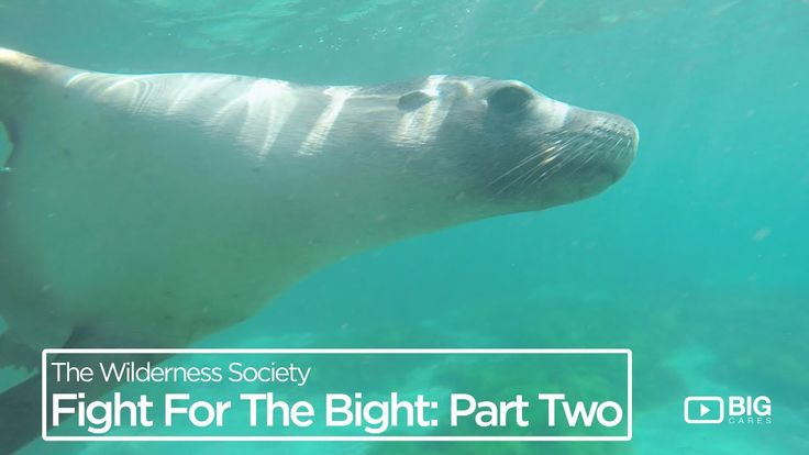 Liked on YouTube: Wilderness Society Fight for the Bight Part 2: Building a society that protects the environment