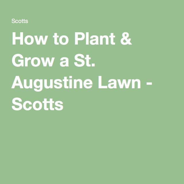 How to Plant & Grow a St. Augustine Lawn - Scotts