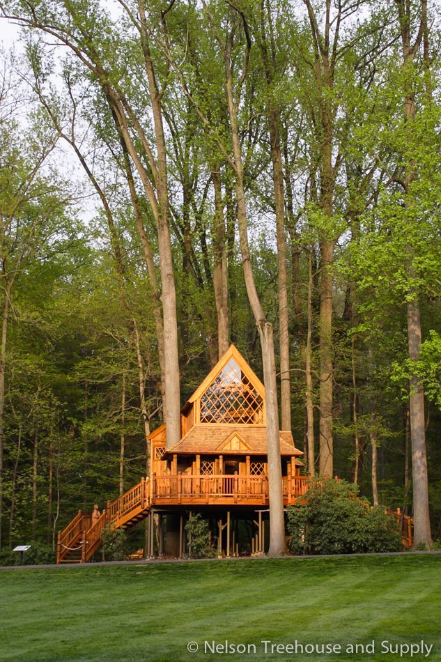 Daryl Mcdonald 10 Things You Didn T Know Tree House Longwood