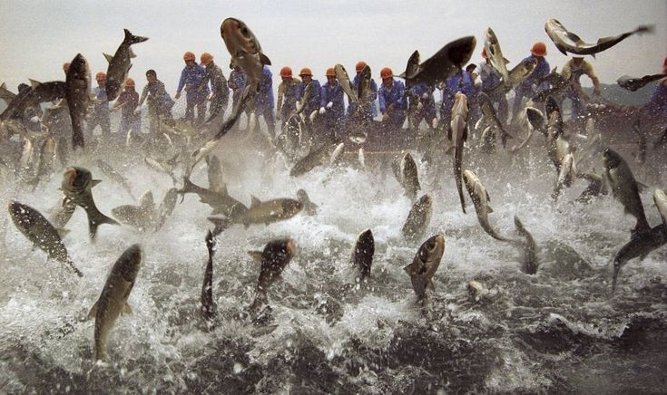 Fischernte im See Qiandao in China: 1078 grüne Inseln hat der künstlich...