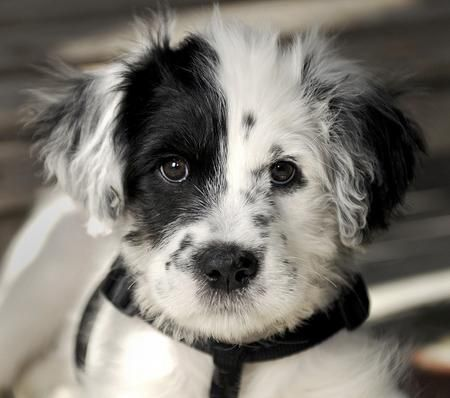 Buzz the Border Collie dalmatian mix. I love him.