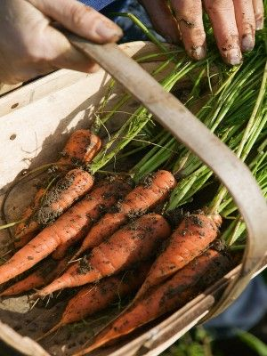 Want To Grow Your Own Veggies? Here's How…