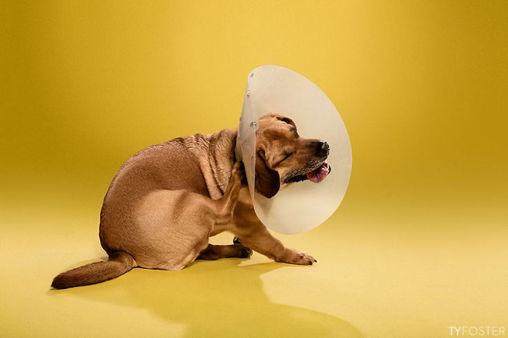 I #Photograph Dogs Wearing Cones Of Shame | Bored Panda #Dogs #puppy