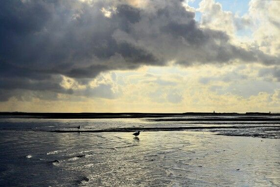 Ebbe im Ijsselmeer in den Niederlanden, Gezeiten, Spaziergang über das Watt