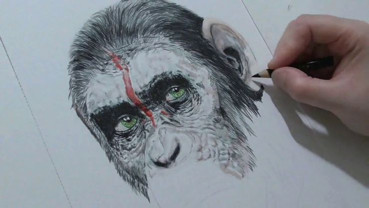 This is a colour pencil drawing of caesar and young son from dawn of the planet of the apes shown in time lapse and drawn using prismacolour pencils