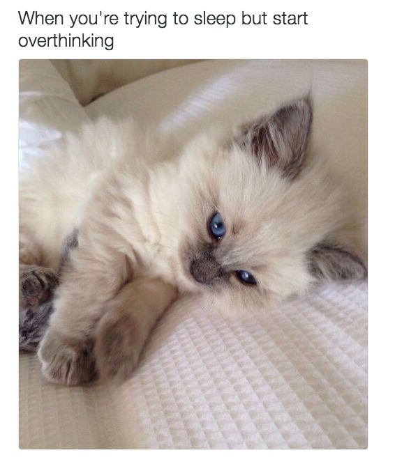 This mistake: | 18 Cat Memes Literally Everyone Will Relate To