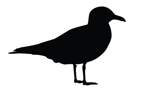 Seagull Silhouette Vector Free Download | BIRDS VECTOR ...