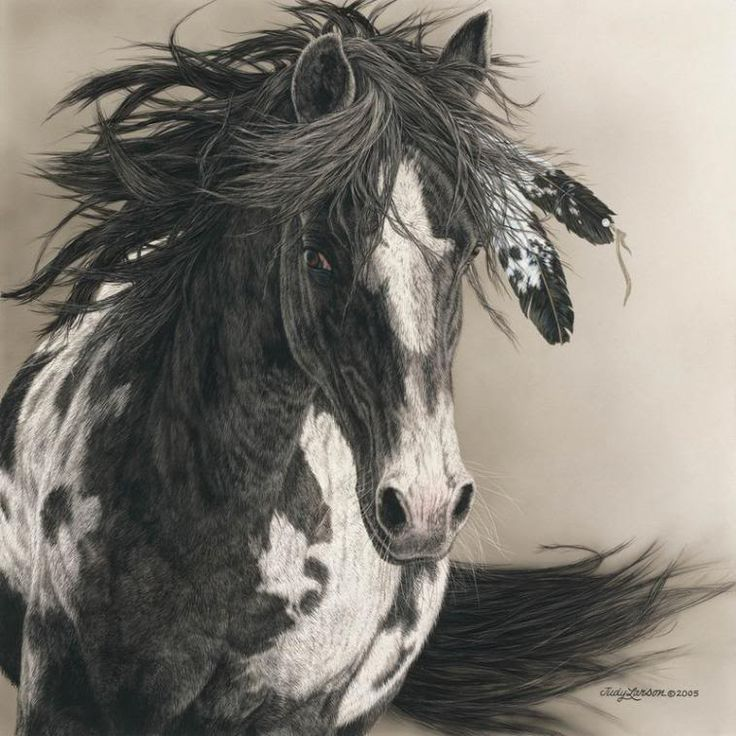 Native American Horse Drawing Pictures and indian horses