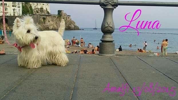 Principessa Luna on Facebook
