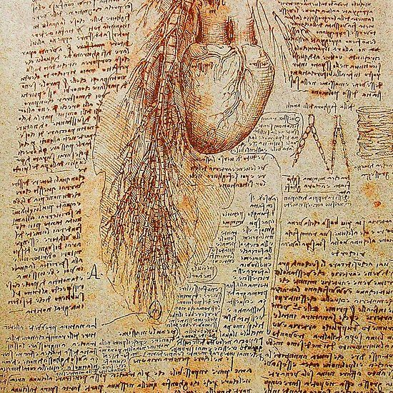 The Heart and the Bronchial Arteries ,Aorta Anatomical Drawing Collection #heart #medical #aorta #leonardodavinci #anatomy #drawings #antique #coroner #cardio #cardiologist