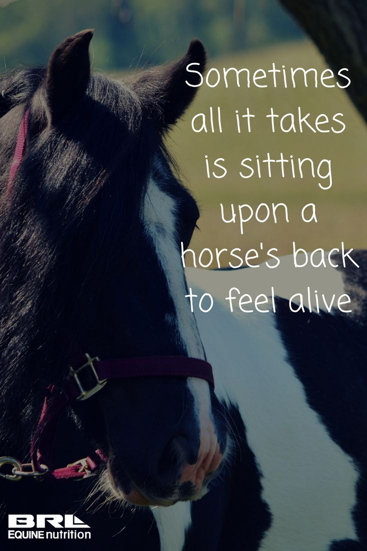 BRL Equine Nutrition's Un-Lock muscle recovery supplement helps your horse with muscle function, stiffness, and fatigue! Inspirational horse quote #BRLequine #UnLock #performancehorse #equestrian