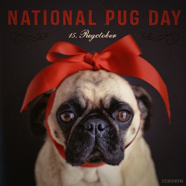 Time to celebrate, it's National Pug Day ;-)