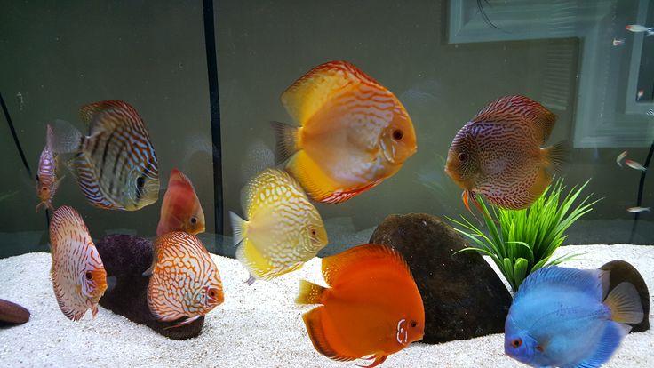 7 Best Discus Aquarium 150 Gallons Images On Pinterest