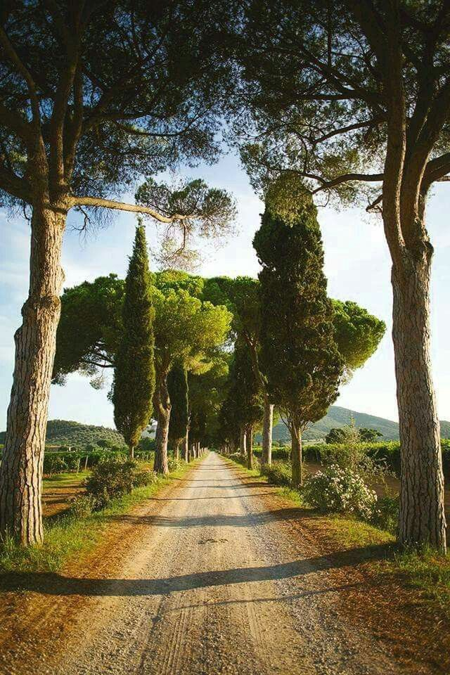 I nostri pini secolari