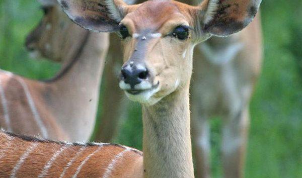 Milwane Wildlife Sanctuary, Swaziland Big Game Parks