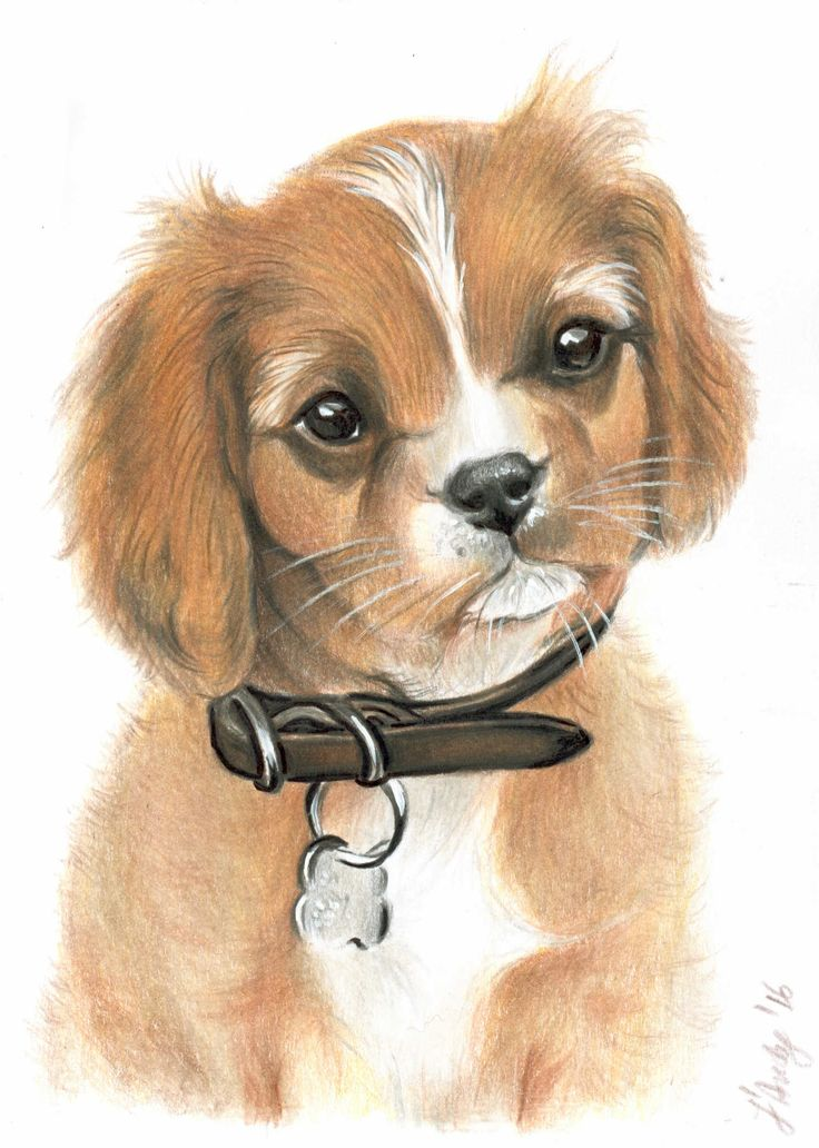 Puppy portrait colored pencils