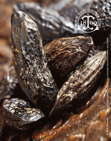 Fèves Tonka - truc et astuce en cuisine - recette facile et au chocolat