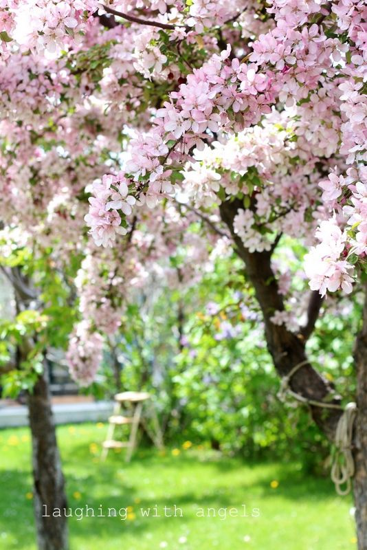25 Best Ideas About Spring Blossom On Pinterest Flowers
