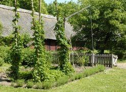 Haven er delt ind i bede med stramme hække af buksbom