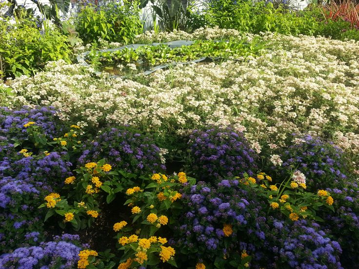 Lantana, Ageratum patina blue, Verbena Lanai vintage rose
